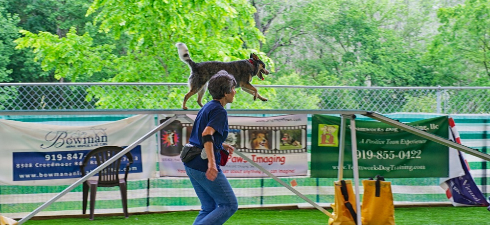 Agility Dog Training Raleigh Nc