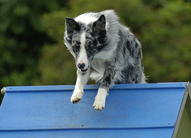 Dog Agility Training Raleigh Nc